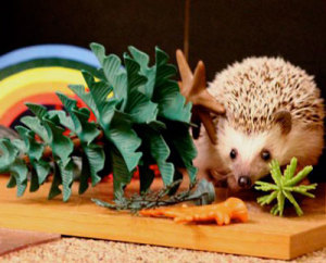 Oscer, the therapeutic hedgehog, and toys.